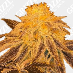Z3 Regular Seeds