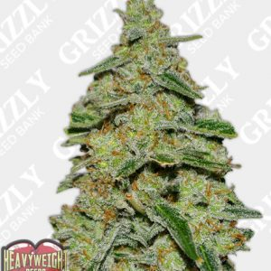 Lemon Cake Feminized Seeds