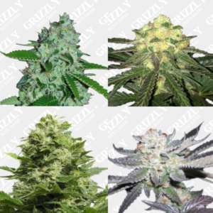 mixed premium feminized seeds pack