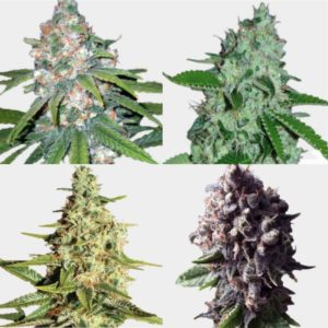 Mixed Premium auto flower seeds Packs