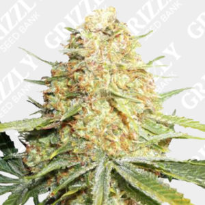 Lemon Zkittle Feminized Seeds