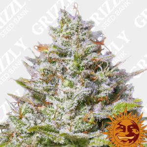 Blue Gelato 41 Feminized Seeds