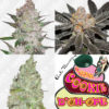 Mixed Premium Auto Flower Seeds Pack #3
