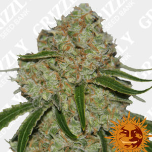 Phantom OG Feminized Seeds