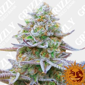 Grizzly Seed Bank | Buy Cannabis Seeds UK | The UK's No1