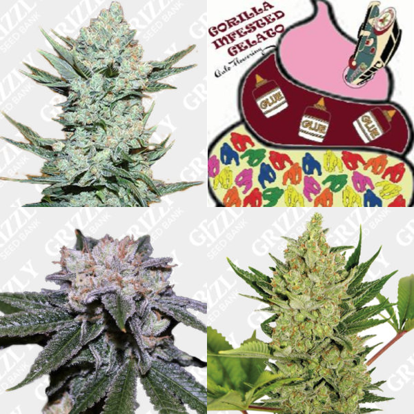Mixed Premium Auto Flower Seeds Pack #2