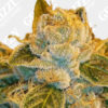Sour Ripper Feminized Seeds