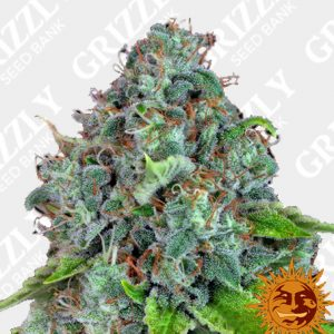 Strawberry Lemonade Feminized Seeds