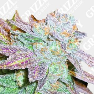 Zkittlez Feminied Seeds