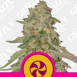 Sweet Zkittlez Feminized Seeds
