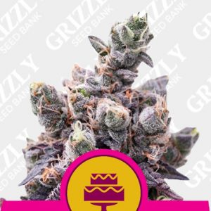 Wedding Gelato Feminized Seeds