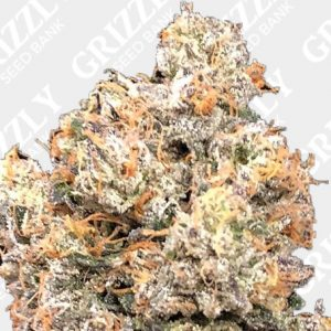 Dankalato Feminized Seeds