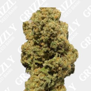 Sherbert Pebbles Feminized Seeds