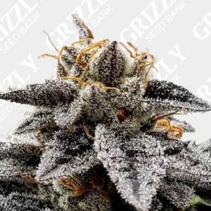 Sour Dosidos Feminized Seeds