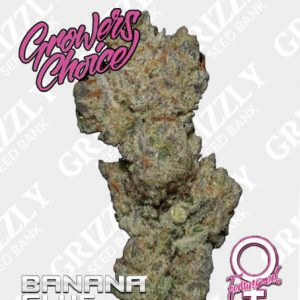 Banana Glue Feminized Seeds