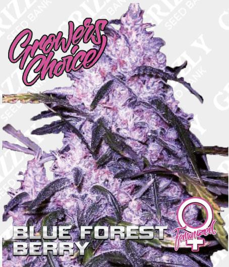 Blue Forest Berry Feminized