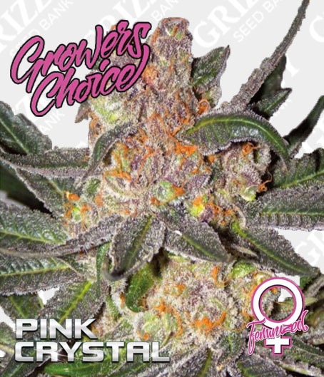 Pink Crystal Feminized Seeds