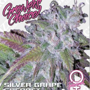 Silver Grape Sherbet Feminized Seeds