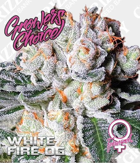 White Fire OG Feminized Seeds