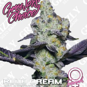 Blue Dream Sherbet Feminized
