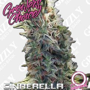 cinderella 99 auto seeds