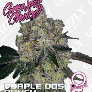 Purple Dosipunch Feminized Seeds