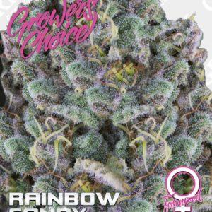 Rainbow Candy Feminized Seeds