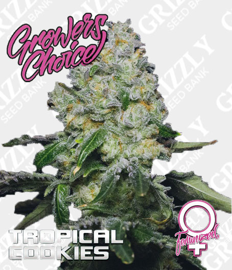 Tropical Cookies Feminized Seeds
