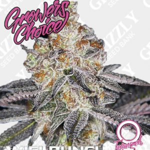 White Fire Punch Feminized