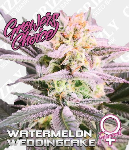 Watermelon Wedding Cake Feminized Seeds