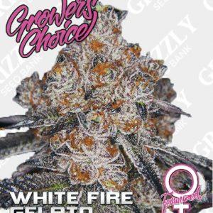 White Fire Gelato Feminized