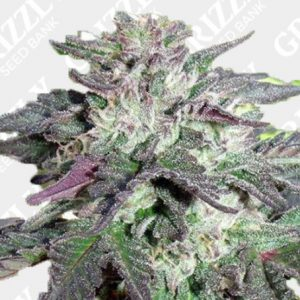 Cherry Pie Feminized Seeds