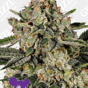 Banana MAC Feminized Seeds