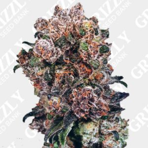 Blueberry Feminized Seeds
