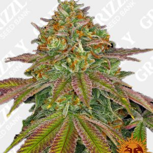 WEDDING CAKE™ Feminized Seeds