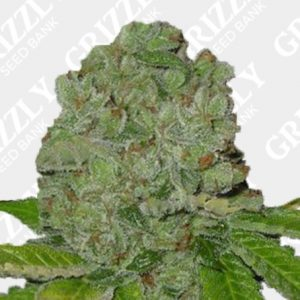 Strawberry Banana Feminized Seeds