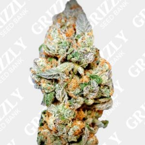 Gelonade Feminized Seeds