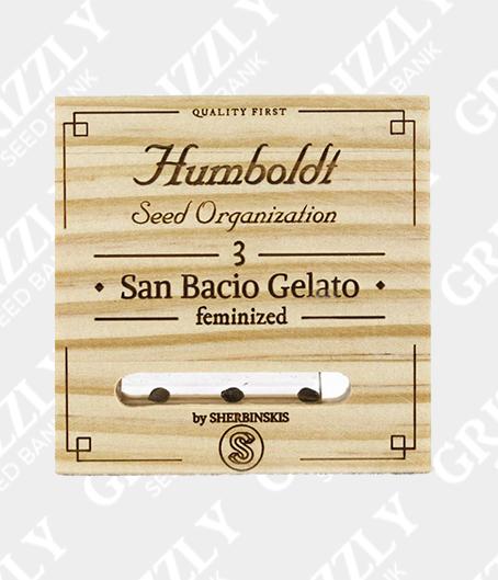 San Bacio Gelato Feminized Seeds