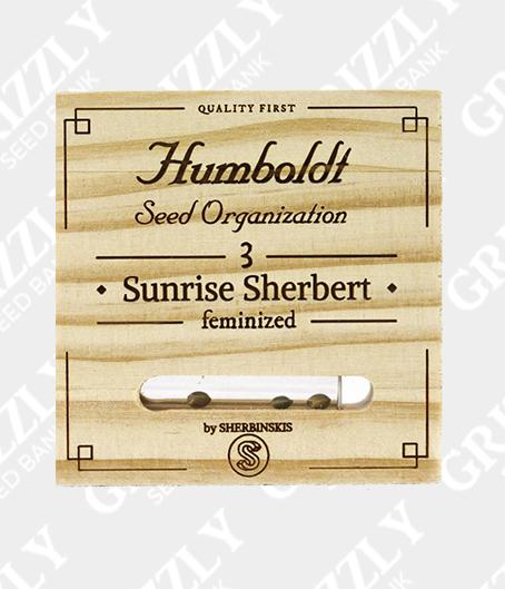 Sunrise Sherbert Feminized Seeds