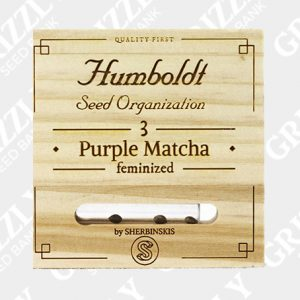 Purple Matcha Feminized Seeds