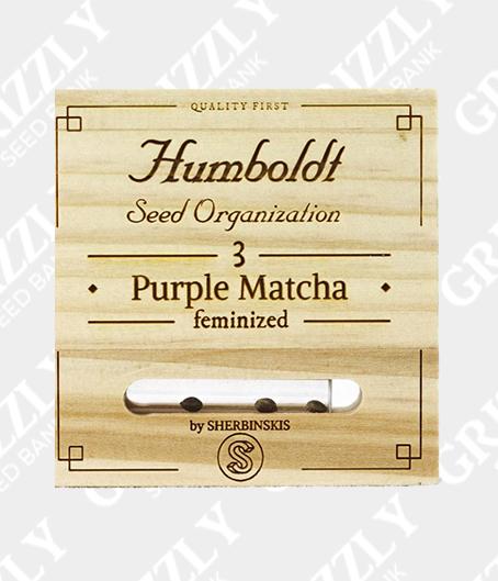 Purple Matcha Feminized Seeds
