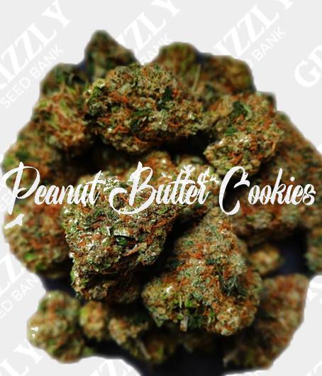 Peanut Butter Cookies Feminized Seeds
