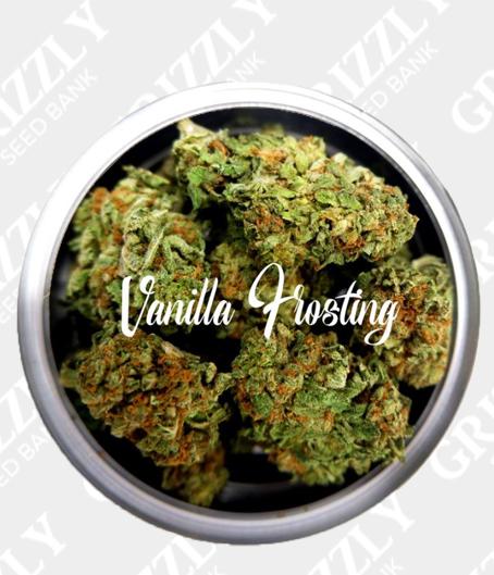 Vanilla Frosting Feminized Seeds