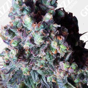 Auto Black Valium Seeds