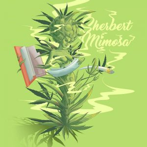 Sherbert Mimosa Auto Seeds