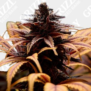 Deep Candy CBD Feminized Seeds