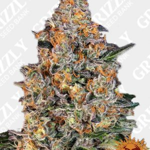 BUBBA KUSH™ Feminized Seeds