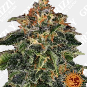 MOBY DICK™ Feminized Seeds