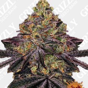 WATERMELON ZKITTLEZ™ Feminized Seeds