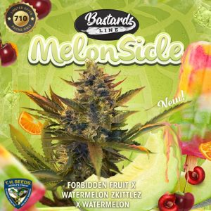 MelonSicle Feminized Seeds